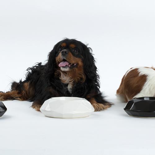 Keraamilised koerte sööginõud.